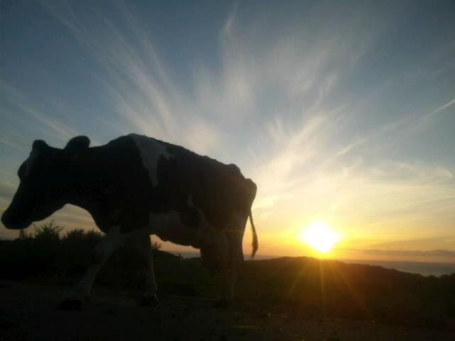 夕焼けと牛